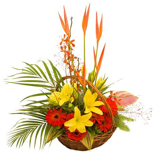 Yellow flower gift for new born girl